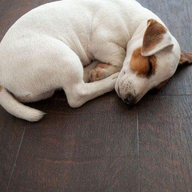 Pet friendly laminate flooring   Floor Dimensions